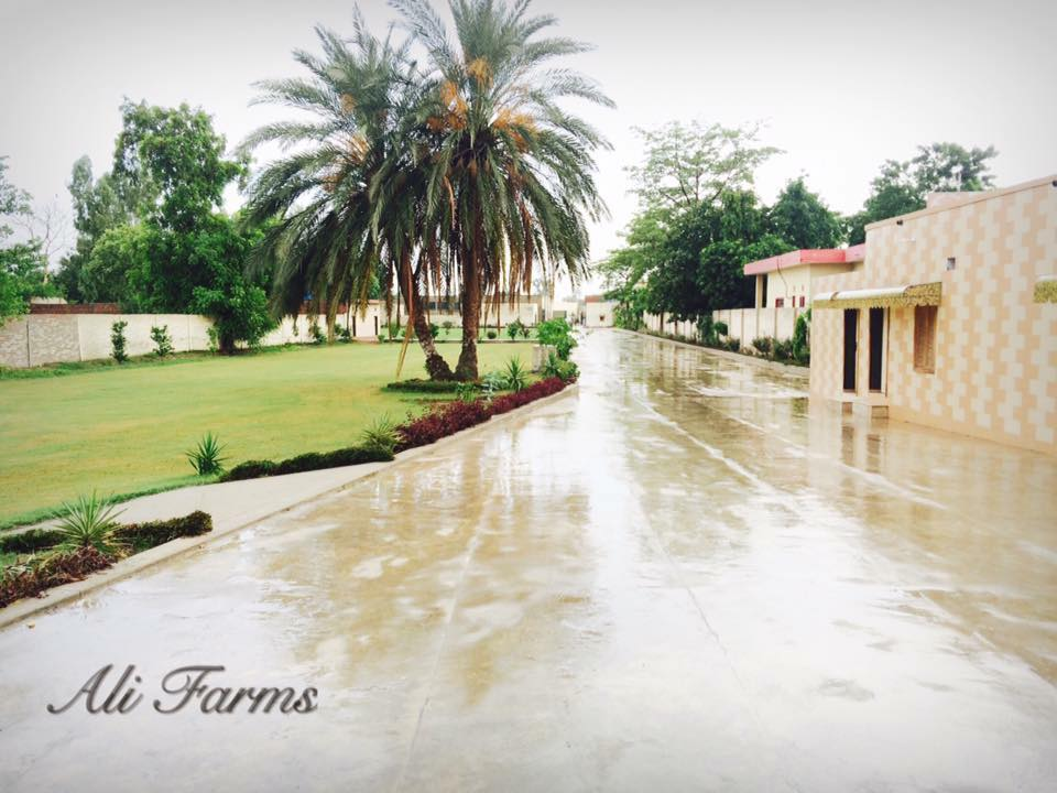 Ali Farm House - Booked.pk